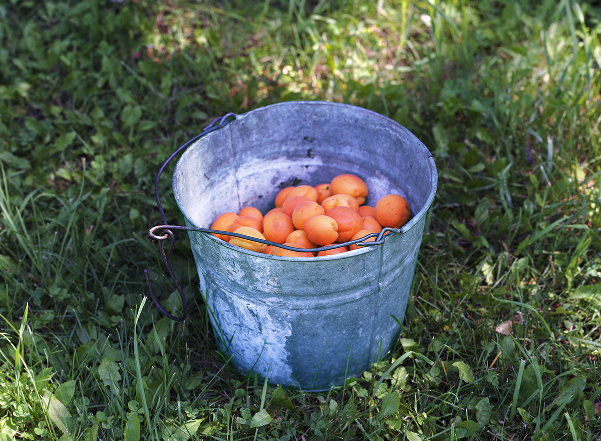 "Barrie Jones, ""Apricots"", 2013, Archival Inkjet print, 12.75 x 17 inches. Estimate: $500."