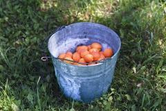 "Barrie Jones, ""Apricots"", 2013, Archival Inkjet print, 12.75 x 17 inches. Estimate: $500."