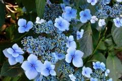 Minoru-Plant-Walk-small-6