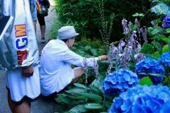 Minoru-Plant-Walk-small-7