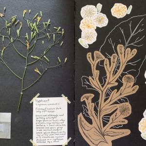 Julienne herbarium
