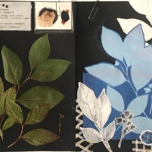 Gabby, herbarium.