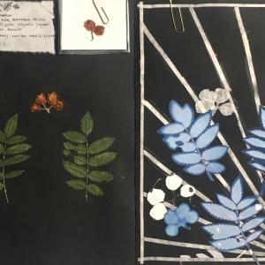 Gabby Herbarium.2
