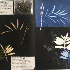Gabby herbarium pages
