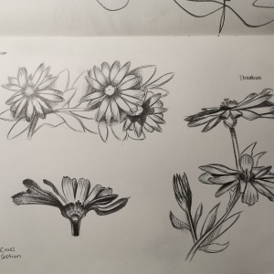 Plant-sketches