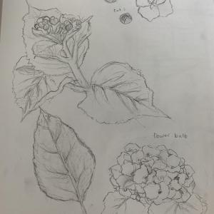 rachel drawing 1