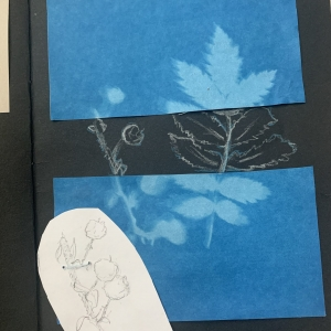 Rachel herbarium 3