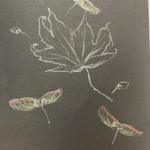 rachel herbarium 1