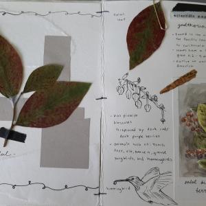 herbarium-samantha(2)