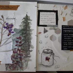 Samantha herbarium.7
