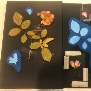 Shirley herbarium 3